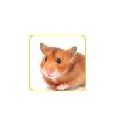 CMC-Bild-Hamster