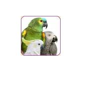 CMC-Bild-Papagei