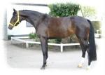 cms-banner-pferde
