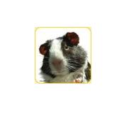 CMC-Bild-Meerschweinchen