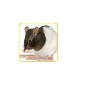 CMC-Bild-Ratten